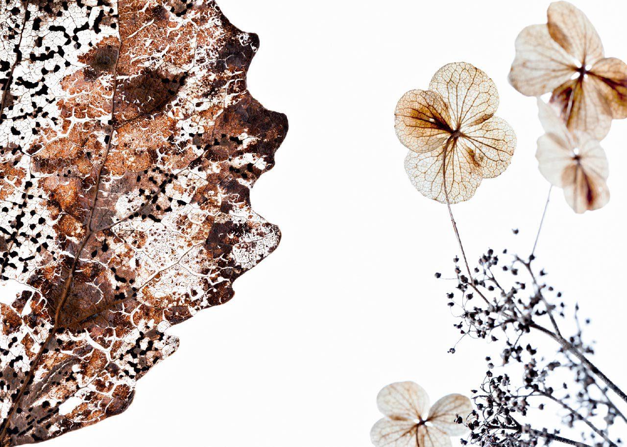 Populus tremula – Hydrangea anomala