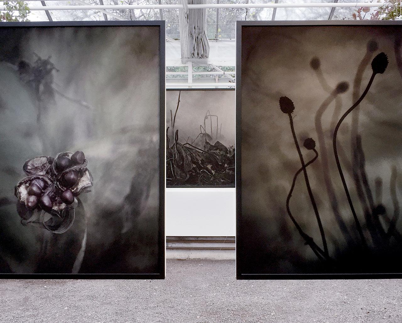 Exhibition – Rosendals trädgård
